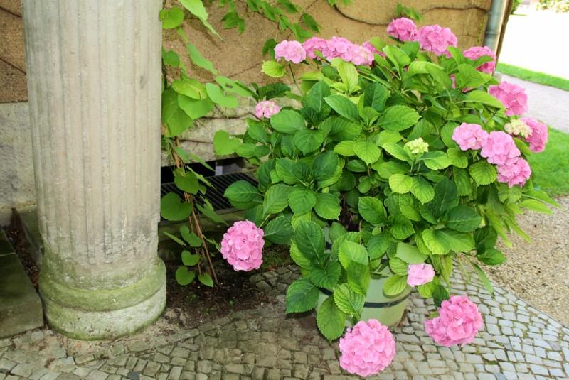 Jane Austen und Gärten